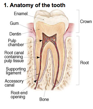 endodontic-photo-a